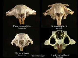 University of Michigan Museum of Zoology: Animal Diversity Web