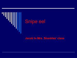 Snipe eel