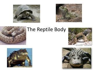 The Reptile Body