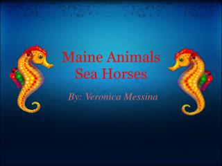 Maine Animals Sea Horses