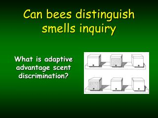Can bees distinguish smells inquiry
