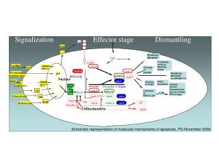 Cell death cascade complex