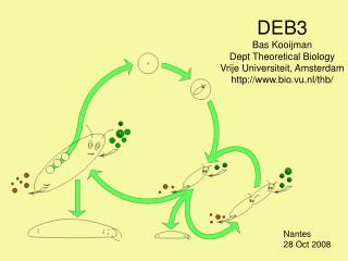 DEB3 Bas Kooijman Dept Theoretical Biology Vrije Universiteit, Amsterdam bio.vu.nl/thb/