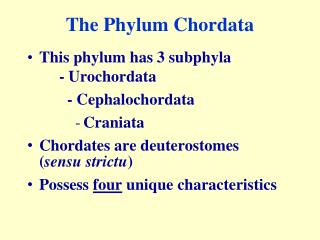 The Phylum Chordata