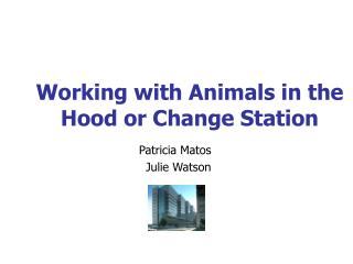 Working with Animals in the Hood or Change Station