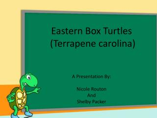 Eastern Box Turtles  ( Terrapene carolina ) A Presentation By: Nicole  Routon And Shelby Packer