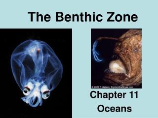 The Benthic Zone