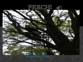 Perch!