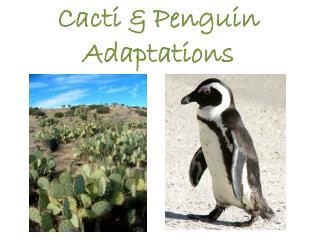 Cacti & Penguin Adaptations