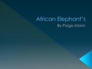 African Elephant's