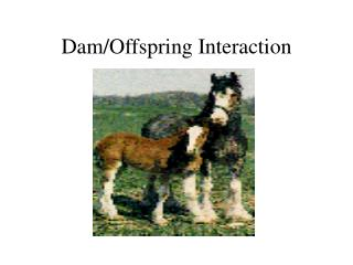 Dam/Offspring Interaction