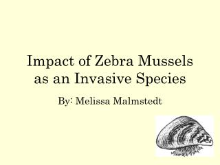 Impact of Zebra Mussels as an Invasive Species