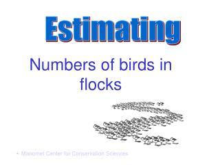 Numbers of birds in flocks