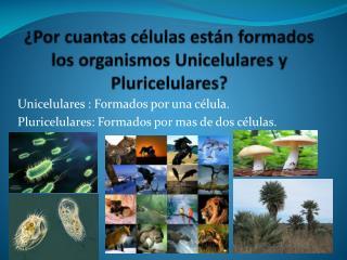 ¿Por cuantas células están formados los organismos Unicelulares y Pluricelulares?
