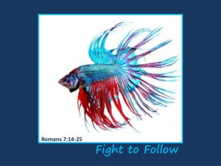 Fight to Follow