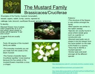 The Mustard Family Brassicacea/Cruciferae