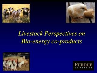 Livestock Perspectives on  Bio-energy co-products