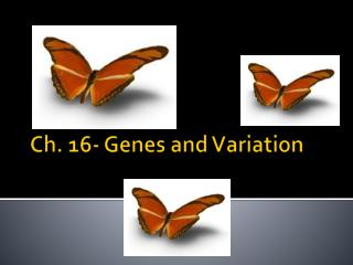 Ch. 16- Genes and Variation