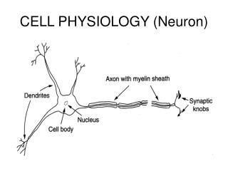 CELL PHYSIOLOGY (Neuron)