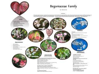 Begoniaceae   Family By   Brenda Lines