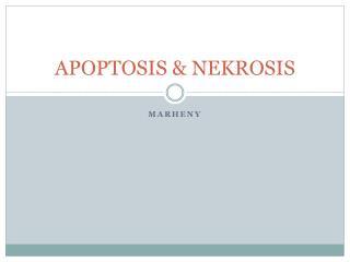 APOPTOSIS & NEKROSIS