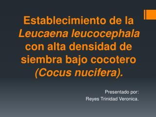 Presentado por: Reyes Trinidad  Veronica .