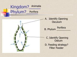 Kingdom?_____ Phylum?_____