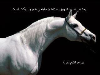 پيشاني اسبها تا روز رستاخيز مايه ي خير و  بركت است.
