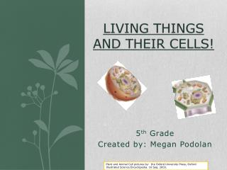 Living Things and their cells!