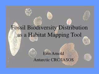 Fossil Biodiversity Distribution as a Habitat Mapping Tool