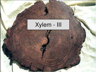 Xylem - III