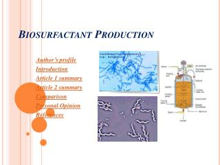 Biosurfactant Production