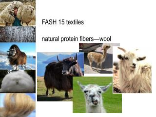 FASH 15 textiles natural protein fibers—wool
