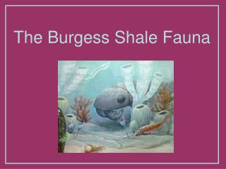 The Burgess Shale Fauna
