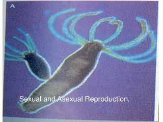 Sexual and Asexual Reproduction.