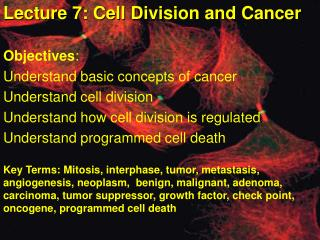 Lecture 7: Cell Division and Cancer