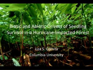Biotic and Abiotic Drivers of Seedling Survival in a Hurricane-Impacted Forest