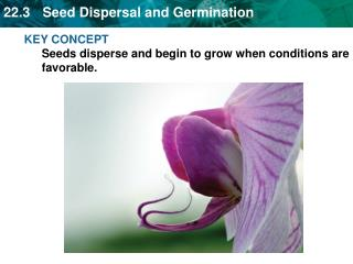 KEY CONCEPT Seeds disperse and begin to grow when conditions are favorable.