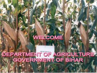 WELCOME DEPARTMENT OF AGRICULTURE GOVERNMENT OF BIHAR