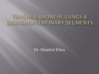 Trachea, bronchi, LUNGS & bronchopulmonary  segmentS