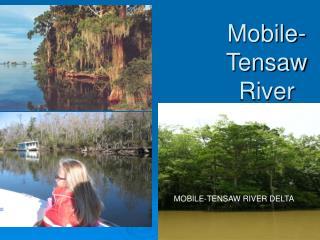 Mobile-Tensaw River Delta