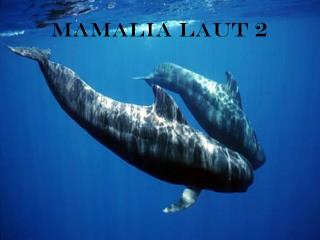 Mamalia laut 2