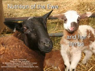 Nutrition of the Ewe