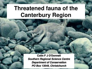 Threatened fauna of the Canterbury Region