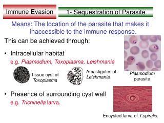 Immune Evasion