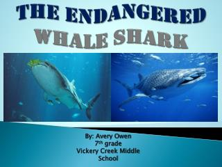 The Endangered Whale Shark