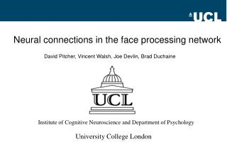 Neural connections in the face processing network
