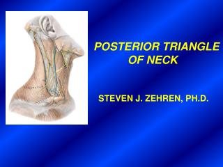 POSTERIOR TRIANGLE                       OF NECK                STEVEN J. ZEHREN, PH.D.