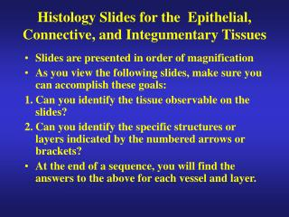 Histology Slides for the  Epithelial, Connective, and Integumentary Tissues