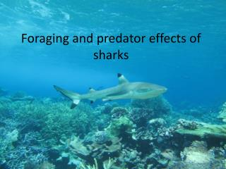 Foraging and predator effects of sharks